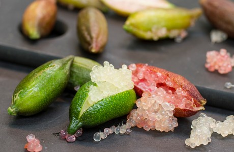 FINGER LIME PRESIDIO SLOW FOOD: SPINTA IMMEDIATA VERSO L'AGRODIFFERENZIAZIONE