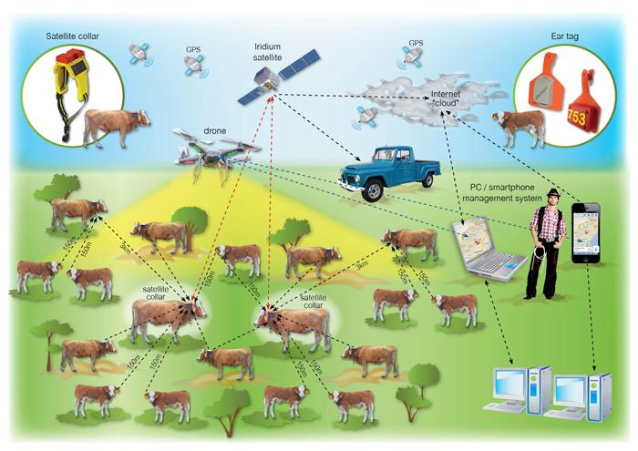 """Le nuove soluzioni """"smart farmer"""" per gli allevamenti allo stato brado"""
